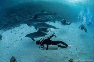 delfiny2