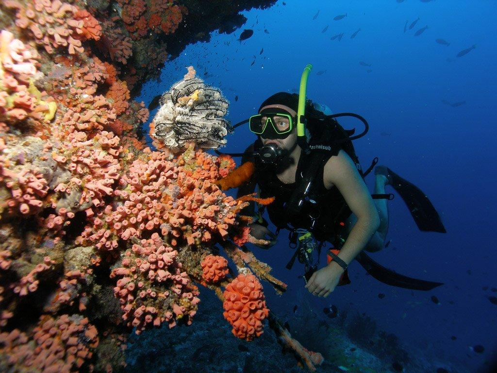 Nurkowanie Malediwy -