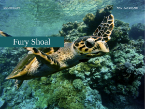 Fury Shoal -