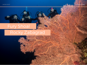 Fury Shoal, Rocky, Zabargad -