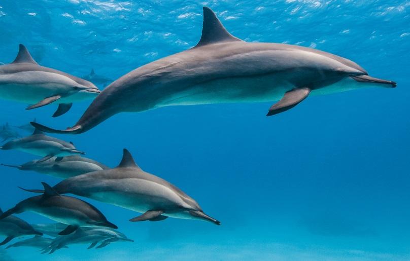 Dzień Delfina na Visie -