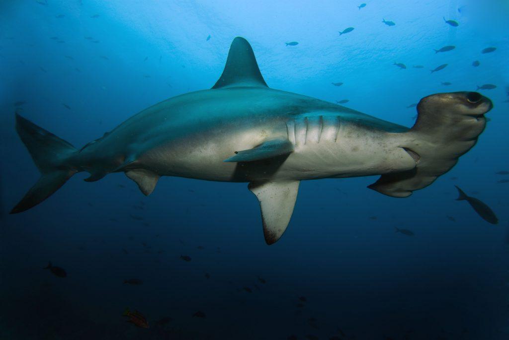 Nurkowanie Galapagos -