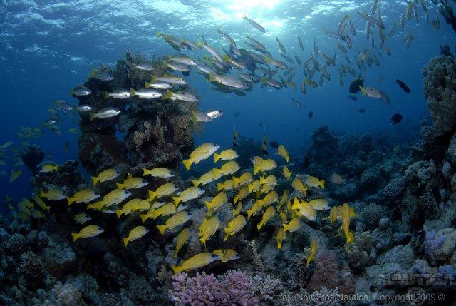 Nurkowanie Laguna Truk -