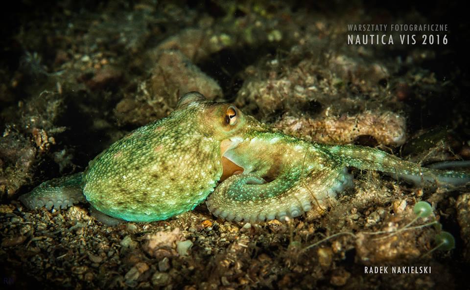 Warsztaty fotografii podwodnej na Visie - czerwiec 2018 -