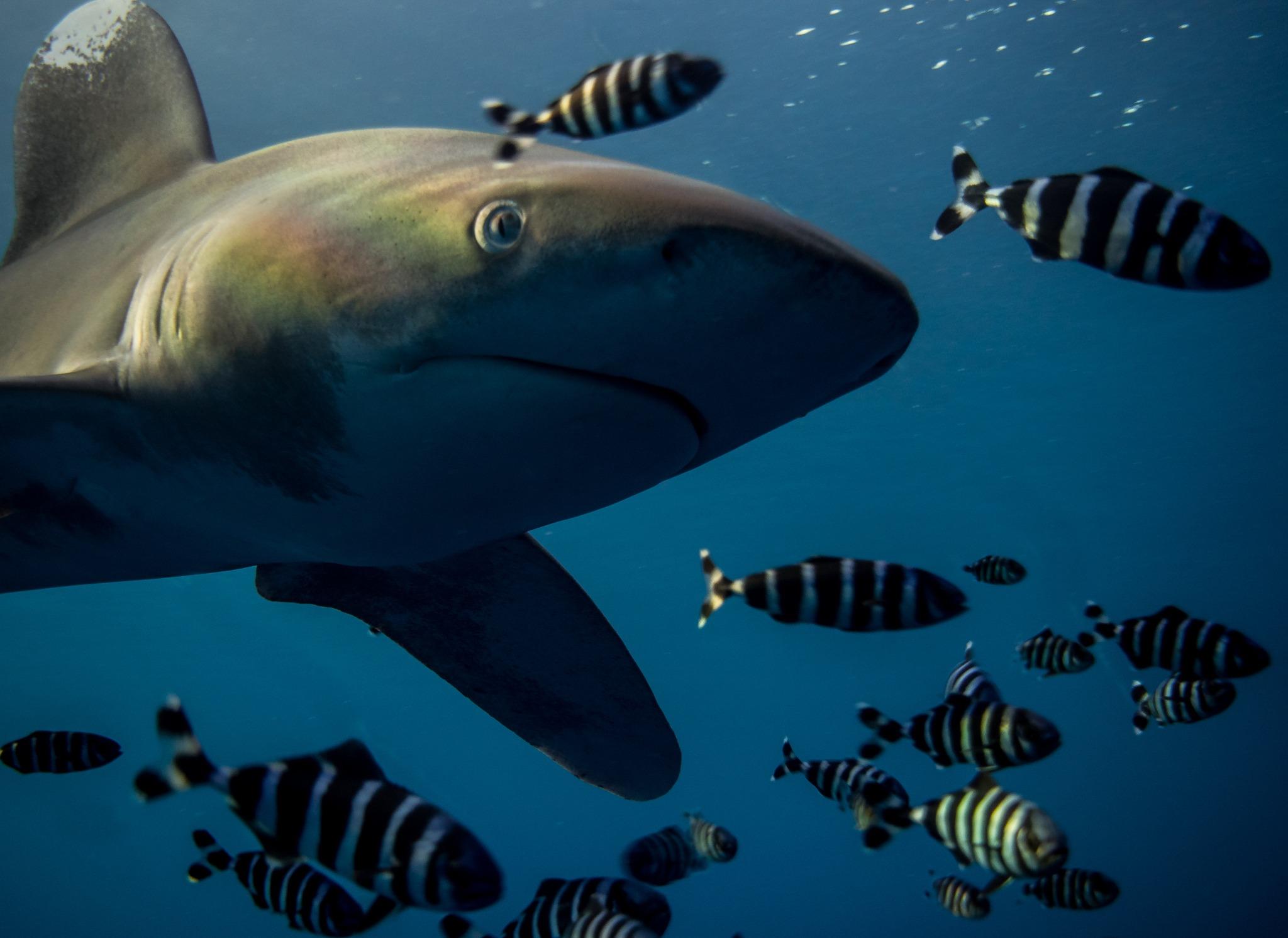 Ciekawostki o rekinach -