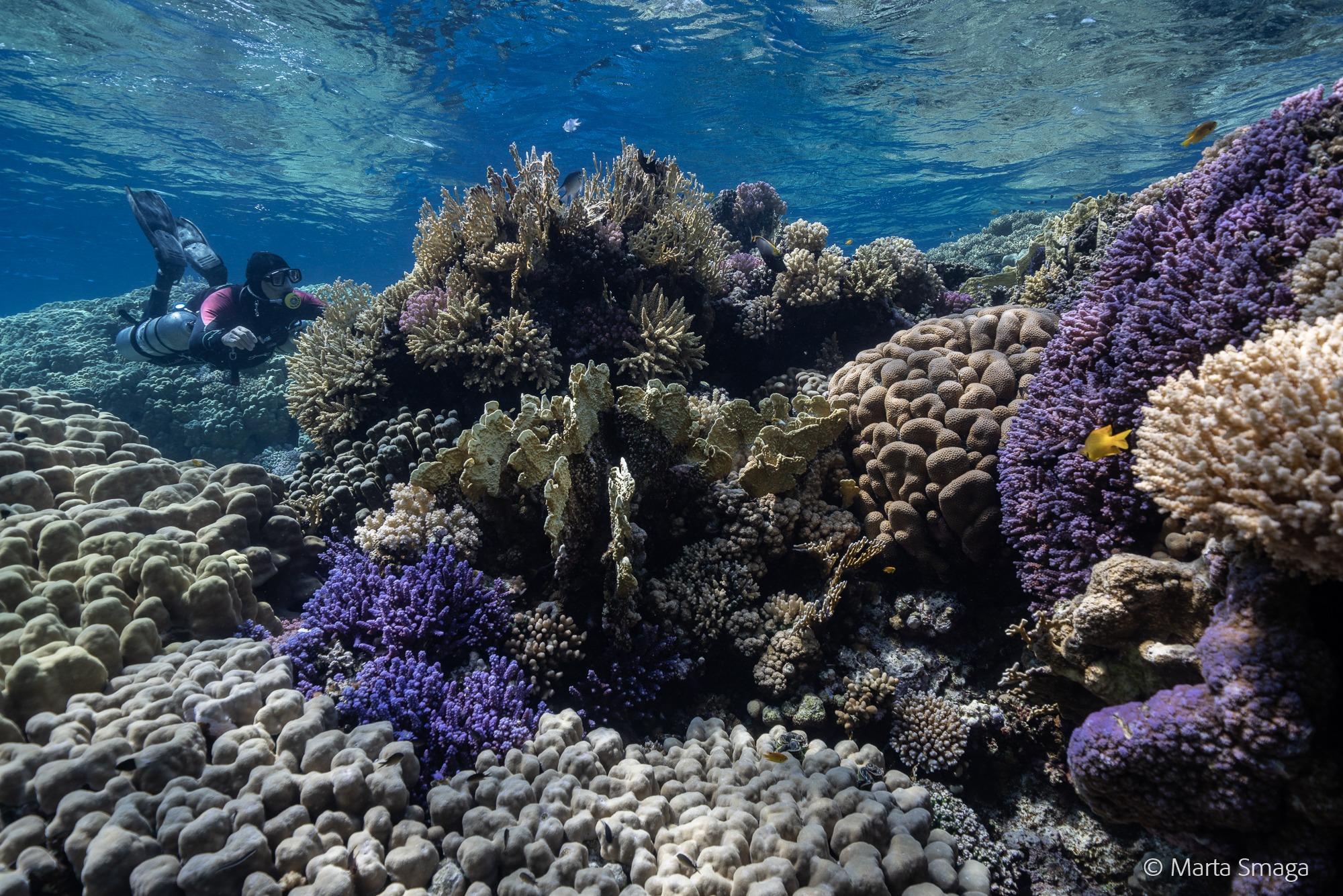 Rafy koralowe Egiptu. Oto 10 najlepszych miejsc do nurkowania -