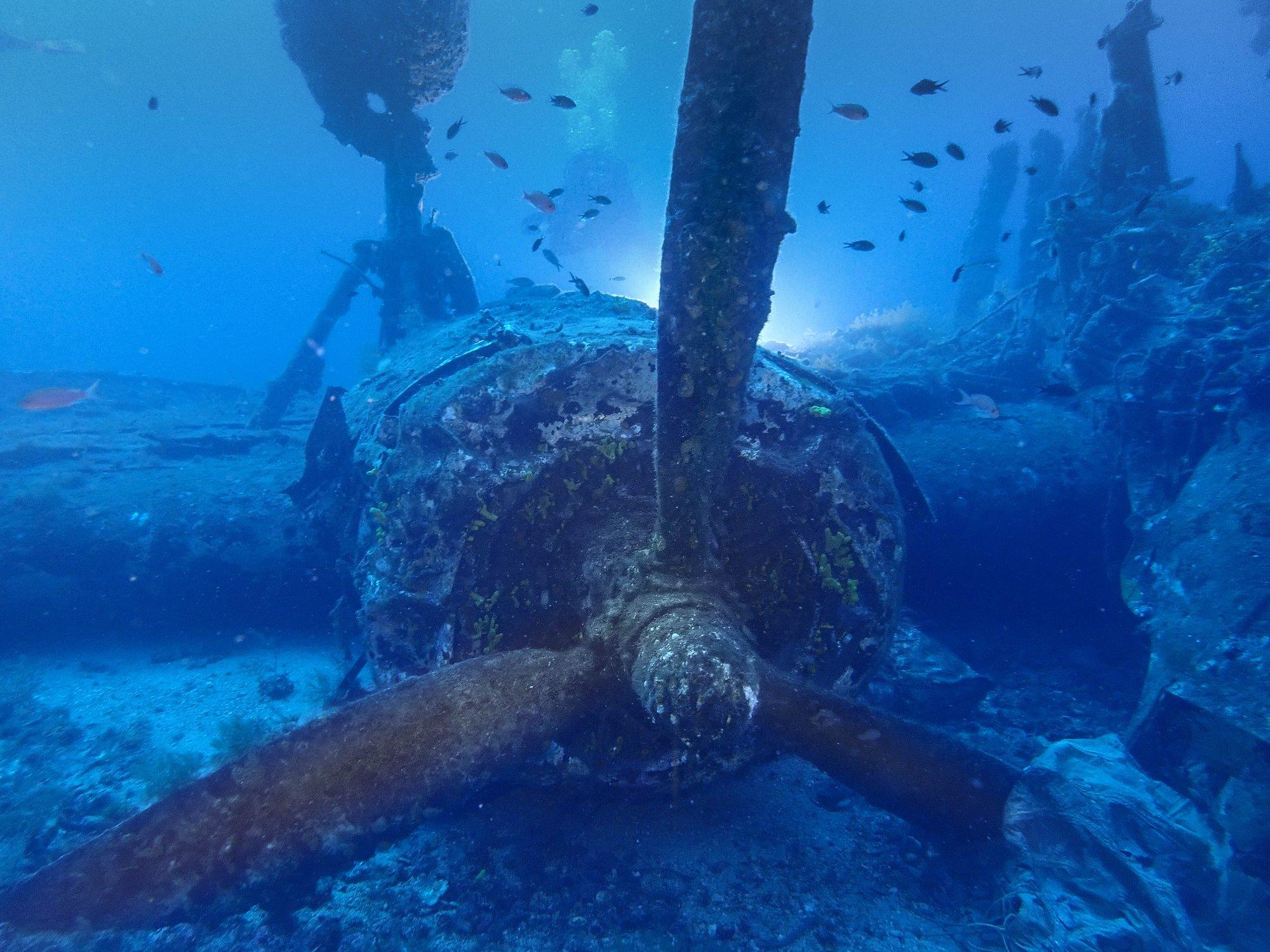 Zlot fotografów podwodnych na Vis - wrzesień 2019 -