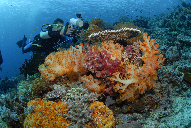 Nurkowanie w Indonezji. Krótki przewodnik po najciekawszych miejscach -