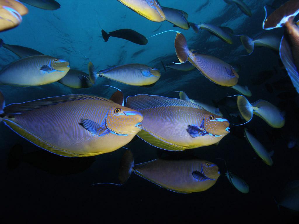 Nurkowanie Bali - Komodo -