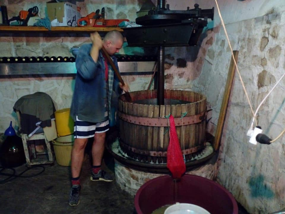 Prawdziwie chorwackie winobranie -